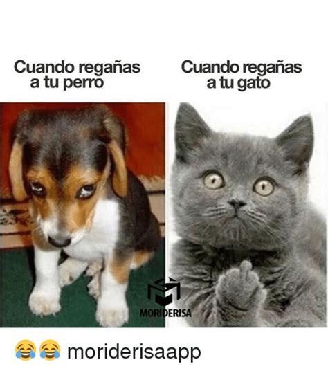 Gato Meme - cuando reganas cuando reganas a tu perro a tu gato moriderisa moriderisaapp meme on sizzle