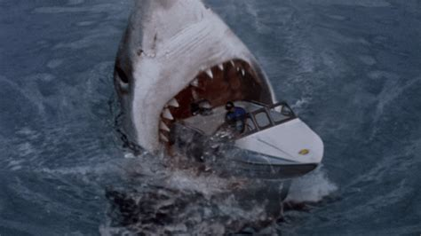 The 10 Best Shark Movies List From Comingsoon.net