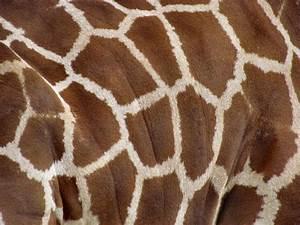 Free stock photos - Rgbstock - Free stock images | giraffe ...