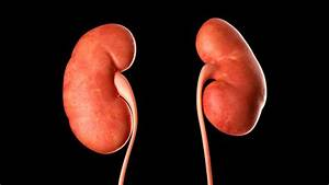 About Autosomal Dominant Polycystic Kidney Disease