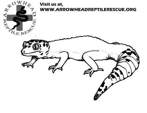 Leopard Gecko Clipart 25