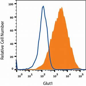Search for glut1: R&D Systems