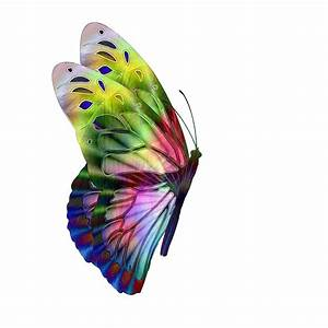 Multi-Colored Butterfly Side View Free Stock Photo ...