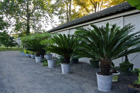 Storing My Tropical Plants For The Winter  The Martha