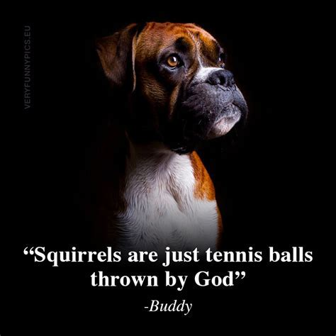 Wise words from Buddy the dog   Very Funny Pics