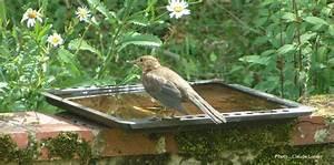 Abreuvoir A Oiseaux Pour Jardin : abreuvoir oiseaux suspendre ~ Melissatoandfro.com Idées de Décoration