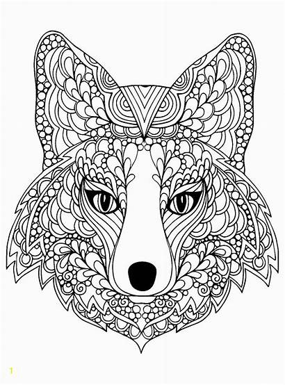 Fox Coloring Arctic Pages Head Beutiful Divyajanani