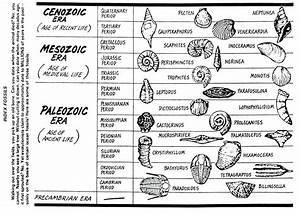 Worksheets Fossil Worksheets Waytoohuman Free Worksheets