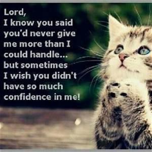 Cat Love Quotes. QuotesGram