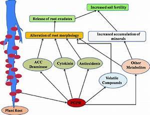 1 An Overview Of Soil Fertility Enhancement Mechanism