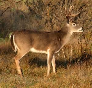 South Texas Big Bucks