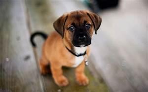 20 Cute Dog Wallpapers – BlogofTheWorld