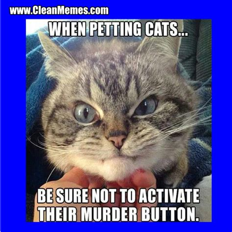 Funny Cat Memes Clean - cat memes clean memes the best the most online page 7