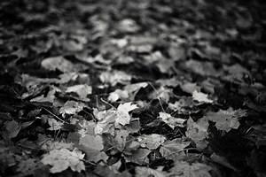 Herbst Schwarz Weiß : mein herbst ist schwarz wei ~ Orissabook.com Haus und Dekorationen