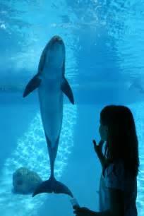 Aquarium Corpus Christi TX