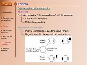 Centre Activa Pau : biologia pau bioqu mica les prote nes cat ~ Melissatoandfro.com Idées de Décoration