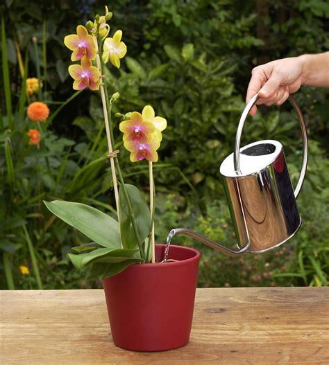 Topfpflanzen Giessen Und Richtig Pflegen by Die 5 Goldenen Regeln Der Orchideenpflege Rezepte