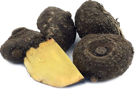 12 Health Benefits Of Elephant Foot Yam Or Suran Vegetable