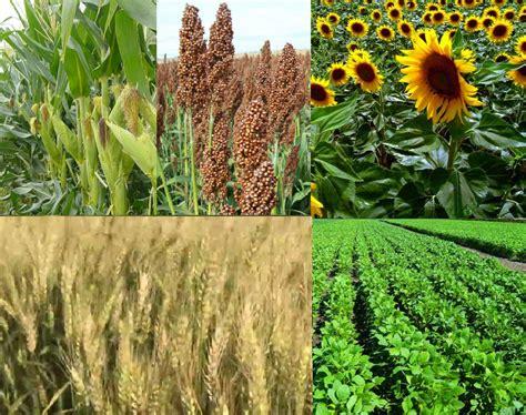 se sembrarian  millon de hectareas mas en la campana