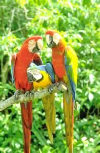 Parrot Jungle Island Miami Florida