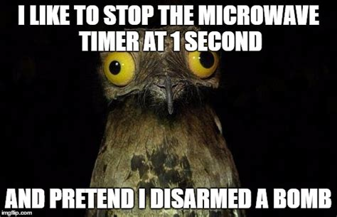 Potoo Meme - potoo bird meme