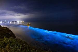 15 places to see bioluminescence pics
