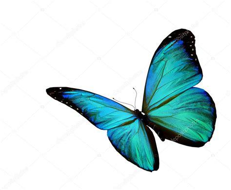 mariposa turquesa volando aislado sobre fondo blanco