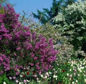 Schnell Wachsende Laubbäume Für Den Garten : baume f r den vorgarten m bel ideen innenarchitektur ~ Michelbontemps.com Haus und Dekorationen