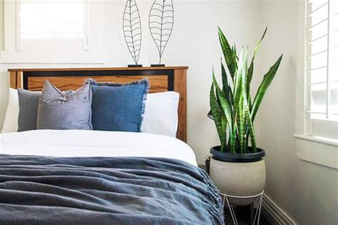 Bedroom Plants For Insomnia by Bedroom Plants For Sleep Apnea And Insomnia Healthdigezt