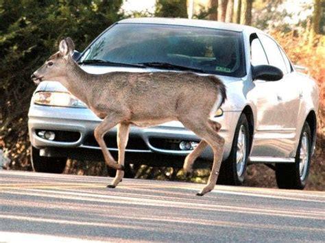 youre   hit  deer   car