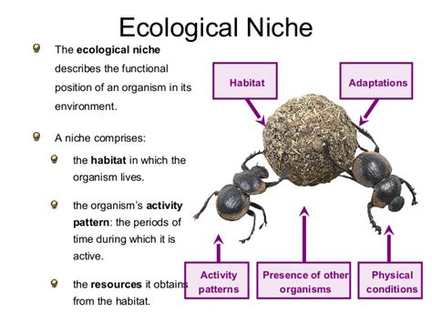 Ecological Concept Niche