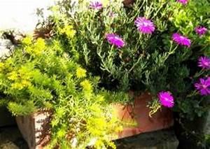 Winterharte Pflanzen Für Balkonkästen : balkonbepflanzung ganzj hrig winterharte balkonbepflanzungen iberis zwergkoniferen balkon ~ Orissabook.com Haus und Dekorationen