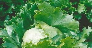 Einfaches Gemüse Für Den Garten : empfehlenswerte gem se sorten f r den garten mein ~ Lizthompson.info Haus und Dekorationen