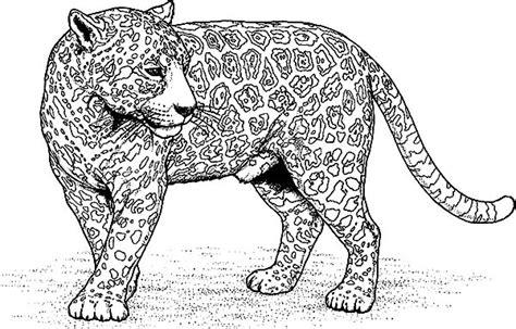 Coloring Jaguar by Jaguar Free Coloring Pages