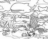Ocean Coloring Pages sketch template