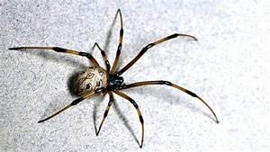 Spider Identification Chart California 11 Best Spider Webs Images On Pinterest Spider Webs