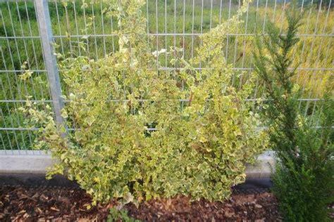 Sichtschutz Für Garten Gebraucht Kaufen by Sichtschutz Garten Kaufen Gebraucht Und G 252 Nstig