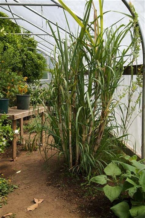 alan kapuler kinship garden  greenhouse  cooking