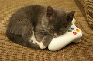 cat controller theif cats photo 34334063 fanpop