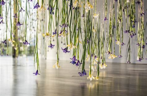 iris exhibition  rebecca louise law celebrates