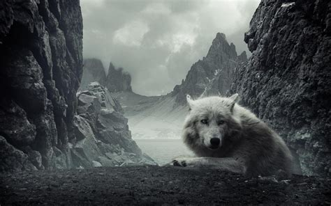 Wallpaper Wolf, Scary, Rock, Loneliness, Predator Desktop