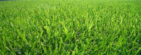 Time For Spring And Summer Turf Transition