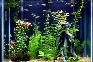 fish tank - Fish Photo (15510675) - Fanpop