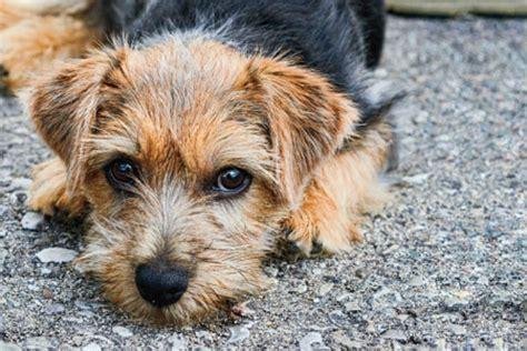 Cutest Small Dog Breeds