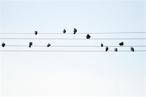Reading the newspaper one morning, i saw this picture of birds on the electric wires. Bird Notes - A Musical Photo of the Day » Greg Goodman: Photographic Storytelling