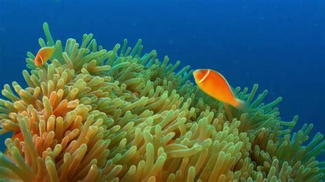 underwater australia oceania