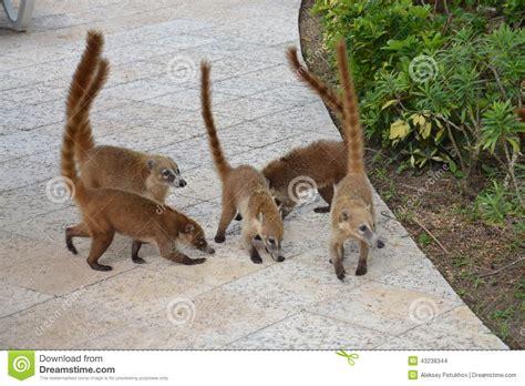 bloodthirsty wild animal  blog wild mexican animals