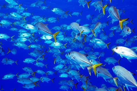 Underwater - Deep Blue Images - Grand Cayman Underwater