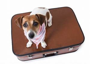 dog kennel bag dog boarding bag dog boarding dallas With dog sitters that stay at your home