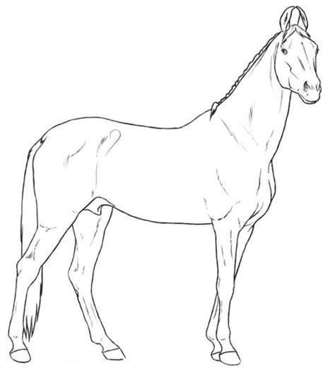 kids  funcom  coloring pages  horse breeds